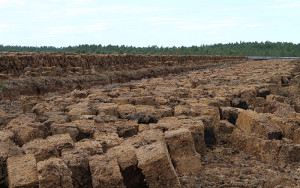 Peat Blockieren exhumiert